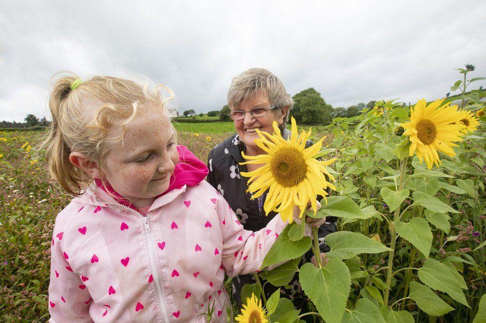 Volunteers admire the sunflowers