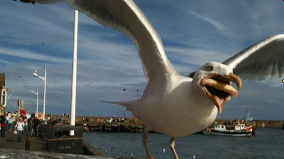 Seagull with chips