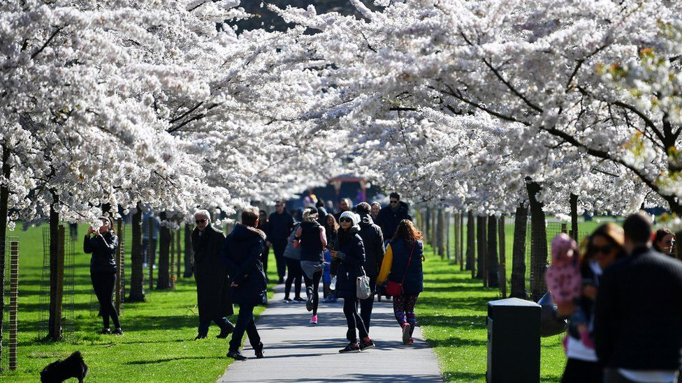 People walk under cherry blossom trees in Battersea Park, as the number of coronavirus disease (COVID-19) cases grow around the world, in London