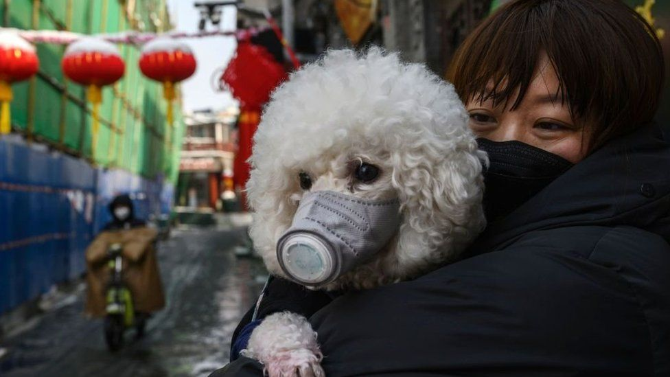 A Chinese woman holds her dog (that is wearing a protective mask as well) as they stand in the street on February 7, 2020 in Beijing, China.