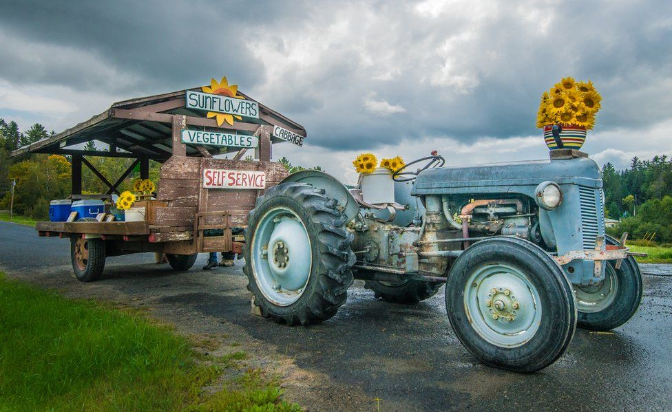 A tractor with sunflowers arranged on it