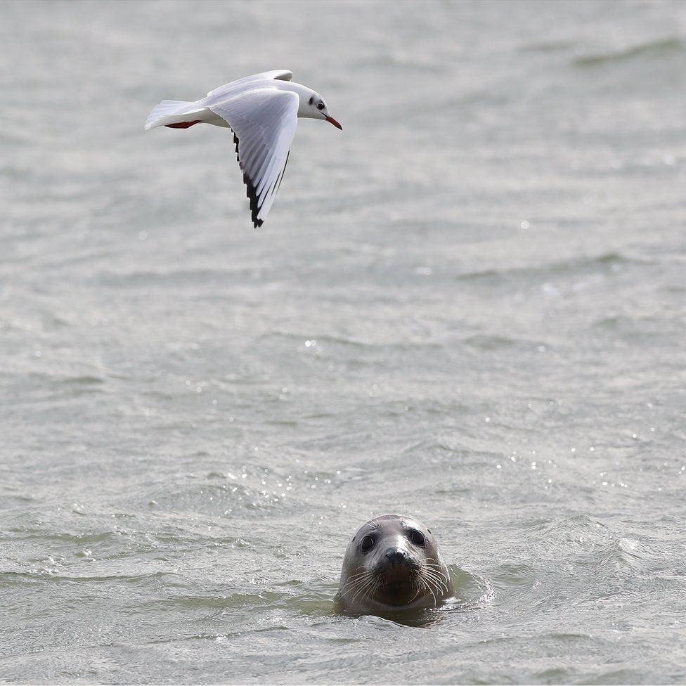 Seal looking at the camera with a bird flying over