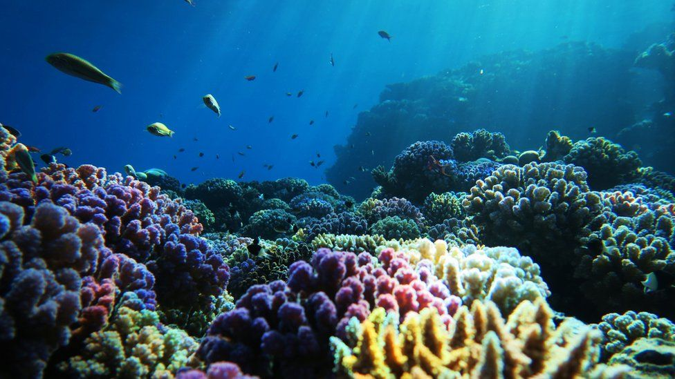 View over a coral reef with multicoloured corals visible and fish swimming above