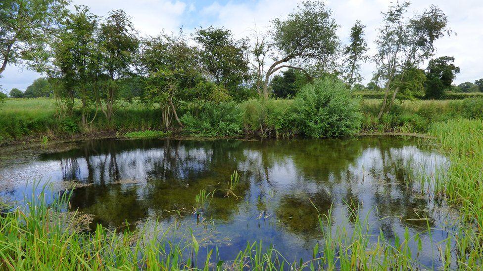 Restored farmland pond, Norfolk.