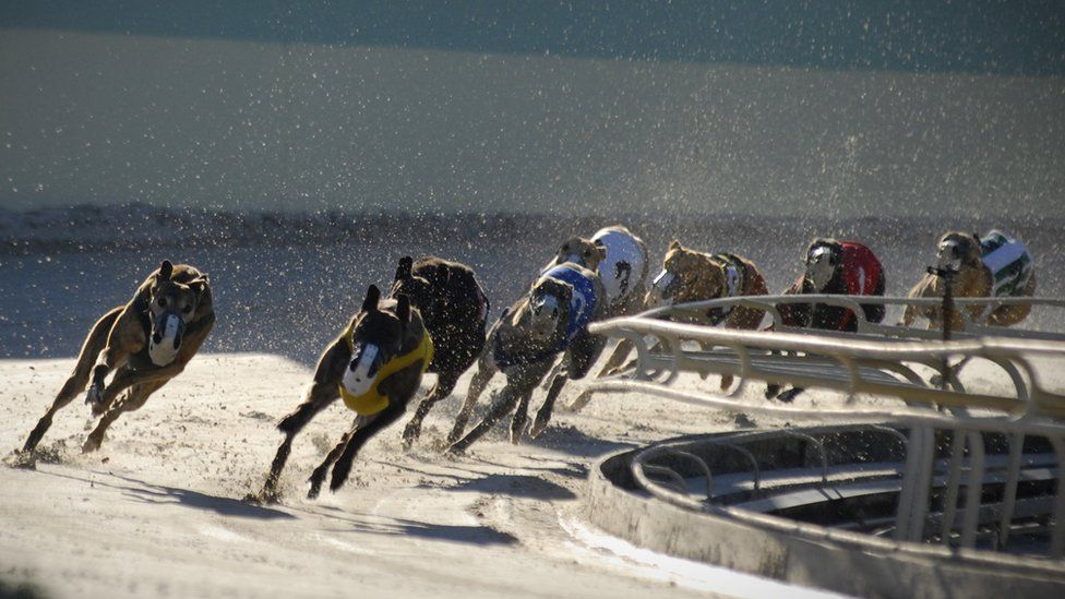 Eleven of America's 17 dog racing tracks are in Florida