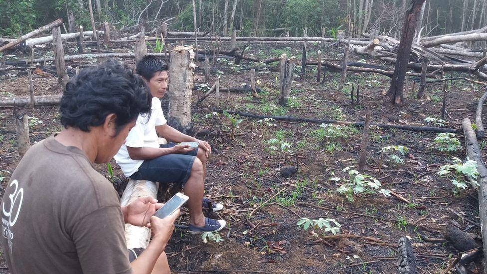 非法砍伐森林