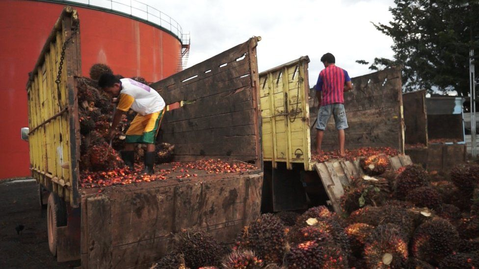 Palm oil production in Indonesia