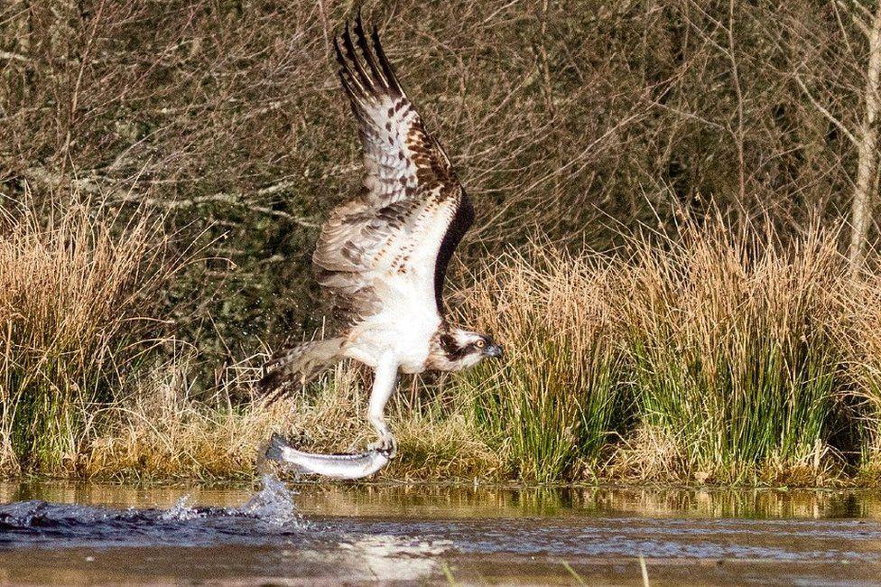 Cairngorms catch
