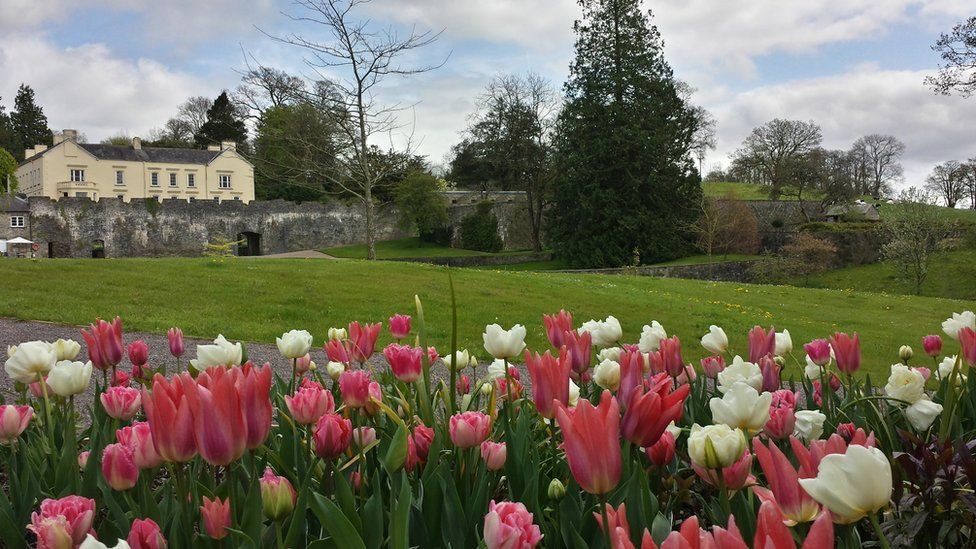 Tulips at Aberglasney Gardens in Carmarthenshire