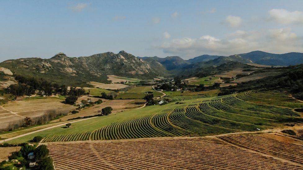 Badenhorst vineyards