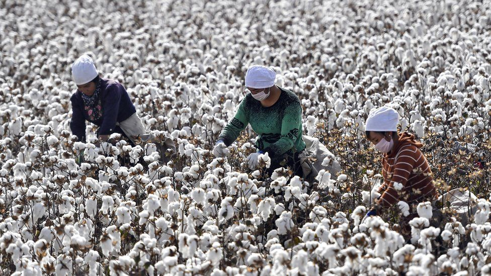 Xinjiang cotton sparks concern over 'forced labour' claims