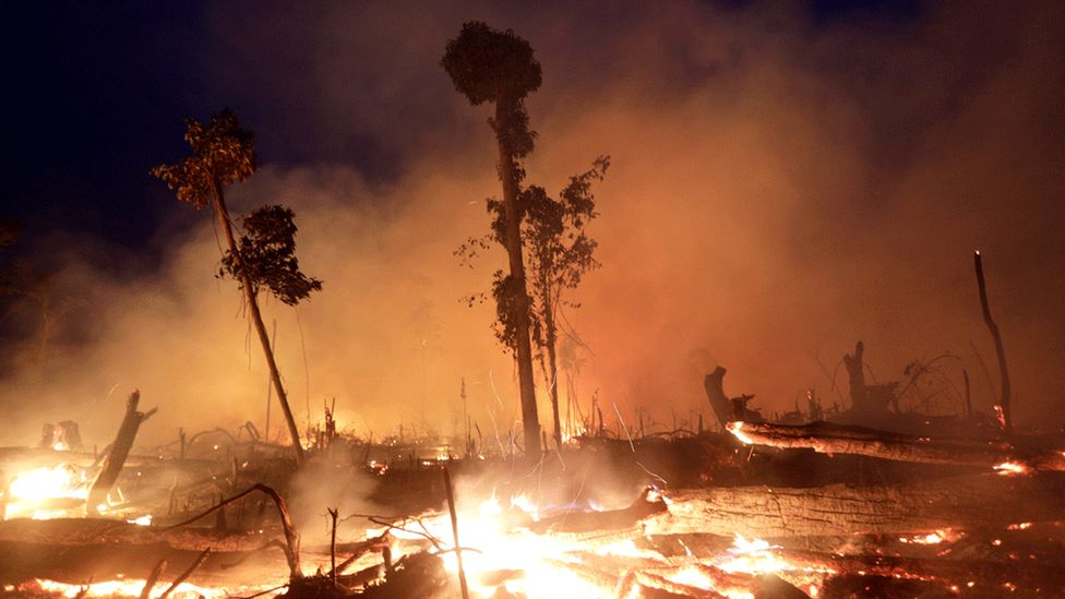Trees in the Brazilian Amazon on fire. File photo