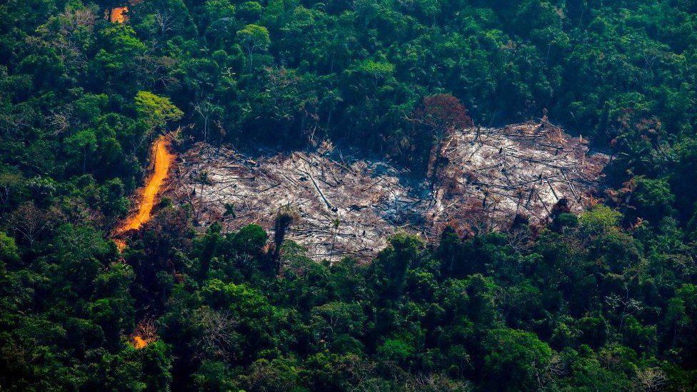 Deforestation in the Amazon basin