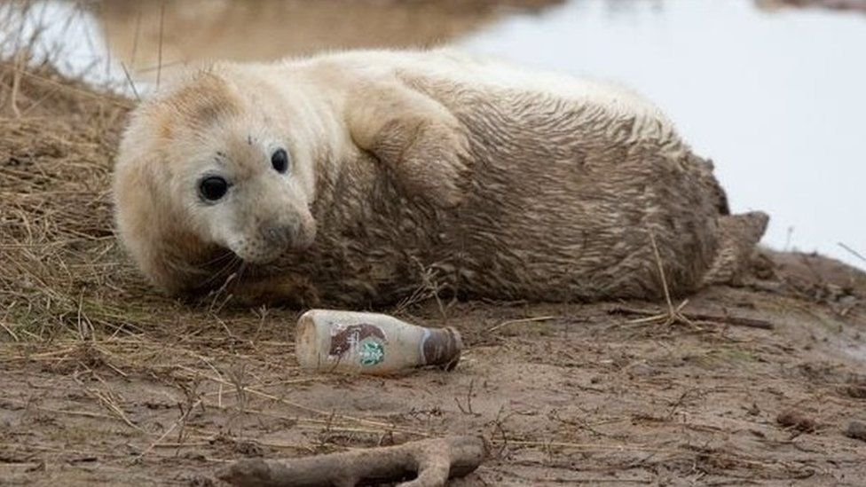 Seal looking at bottle on beach