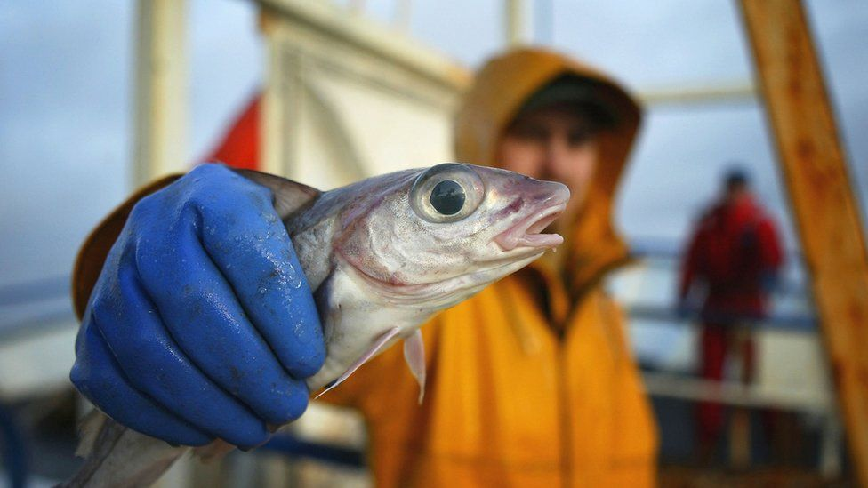 Fisherman holding a haddock