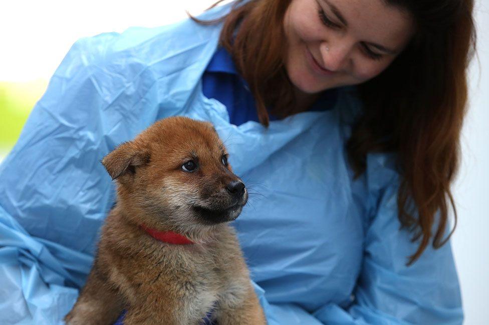 A rescued Korean dog in San Francisco