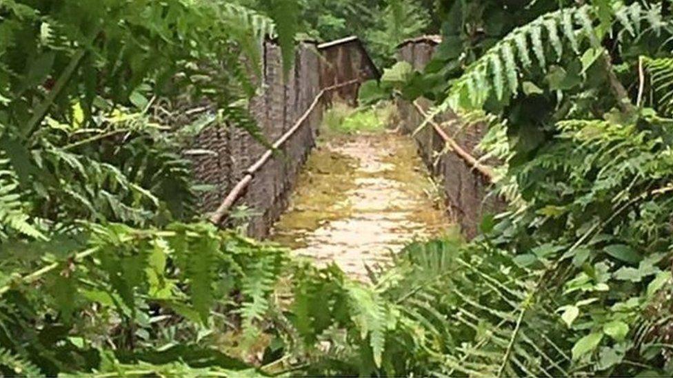 Overgrown railway bridge