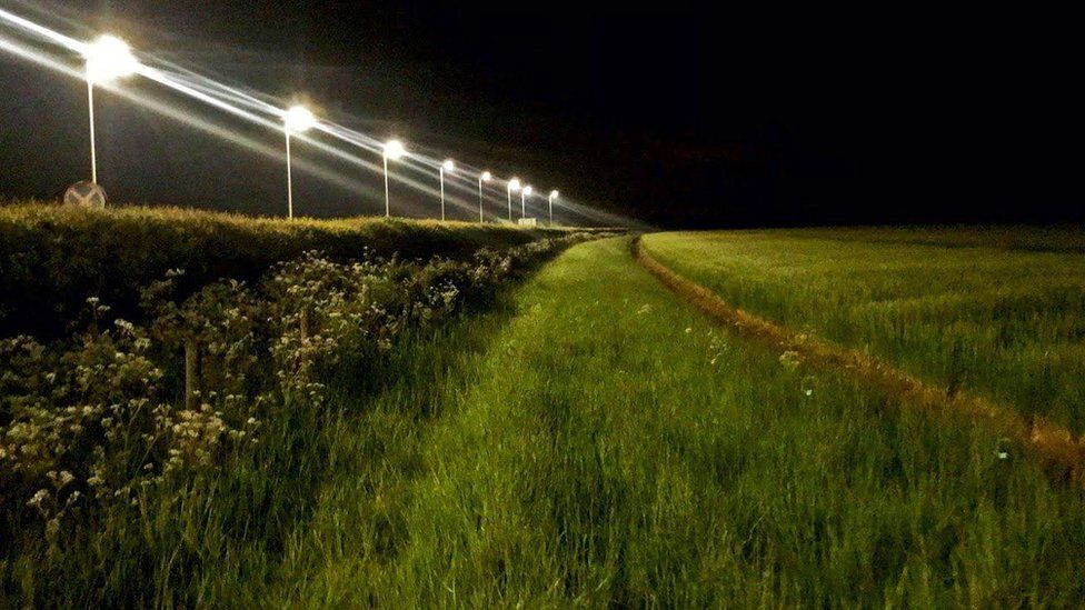 Light pollution from street lamps linked to insect loss