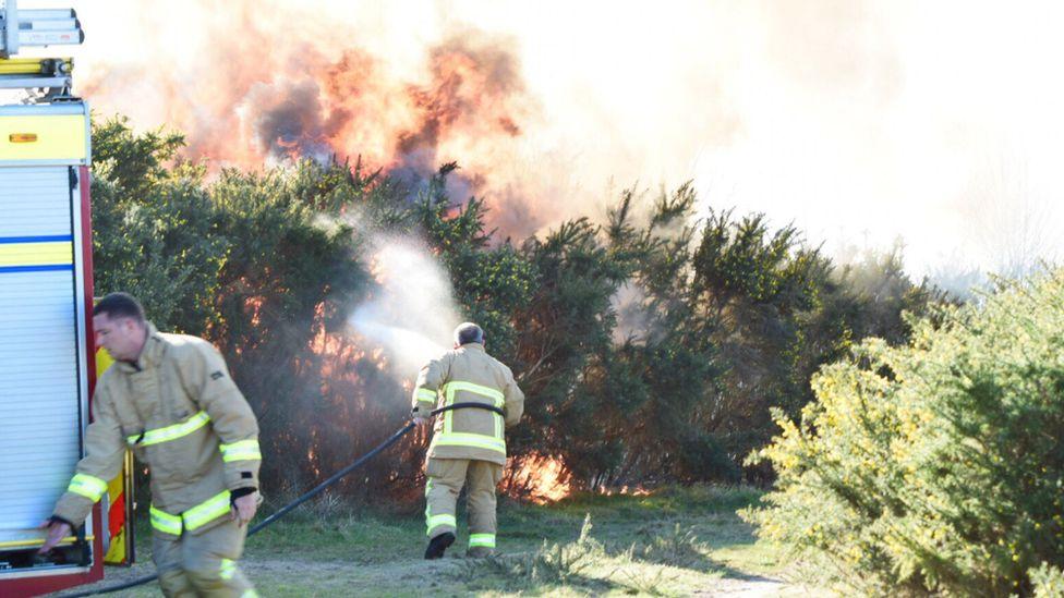 Blaze in the Ashdown Forest