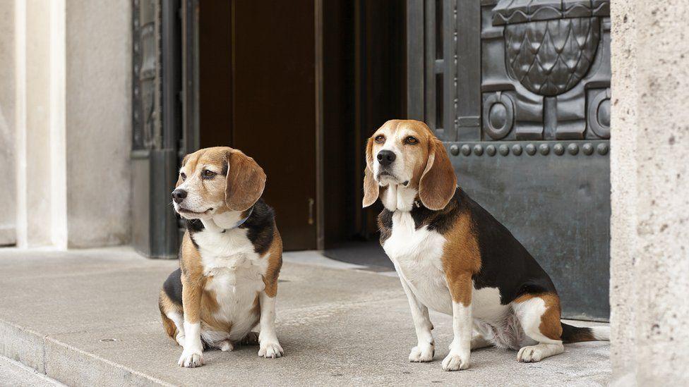 Dogs at the Park Hyatt Vienna