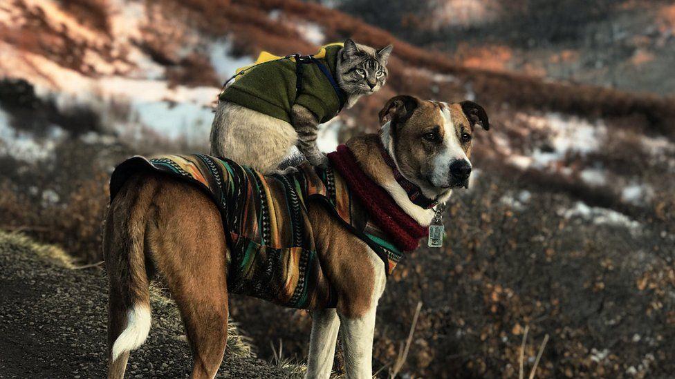 Resultado de imagem para Henry, o cachorro, e Baloo, o gato