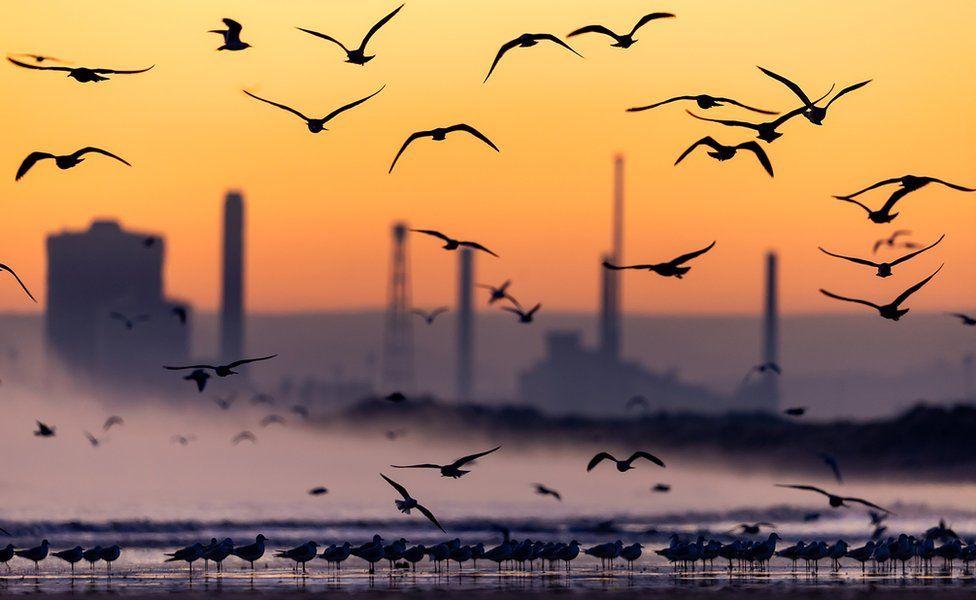Gulls at sunrise - Hartlepool