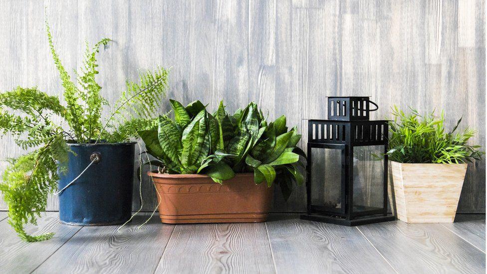 Baratas y fáciles de conseguir: las sorprendentes plantas que mejoran la calidad del aire en casa
