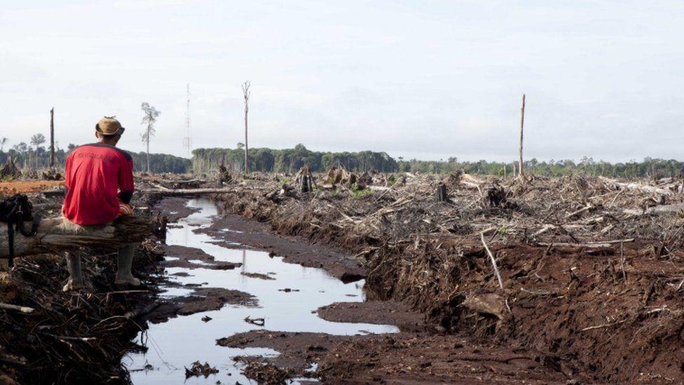 Forest loss, Borneo