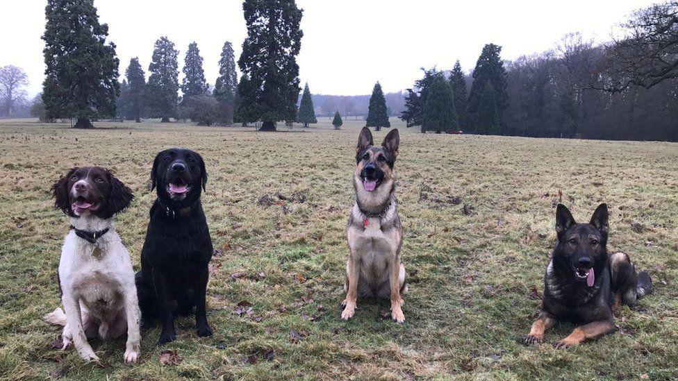 Berwyn dogs