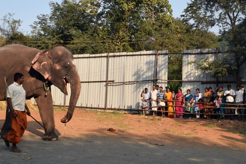 Elephant at the camp