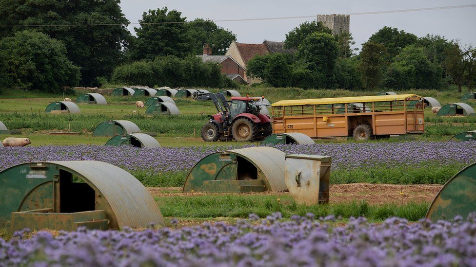 Pigs, flowers, tractor at Dingley Dell farm
