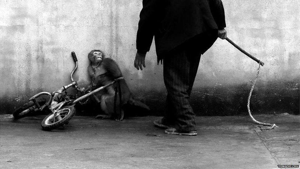 Monkey with trainer