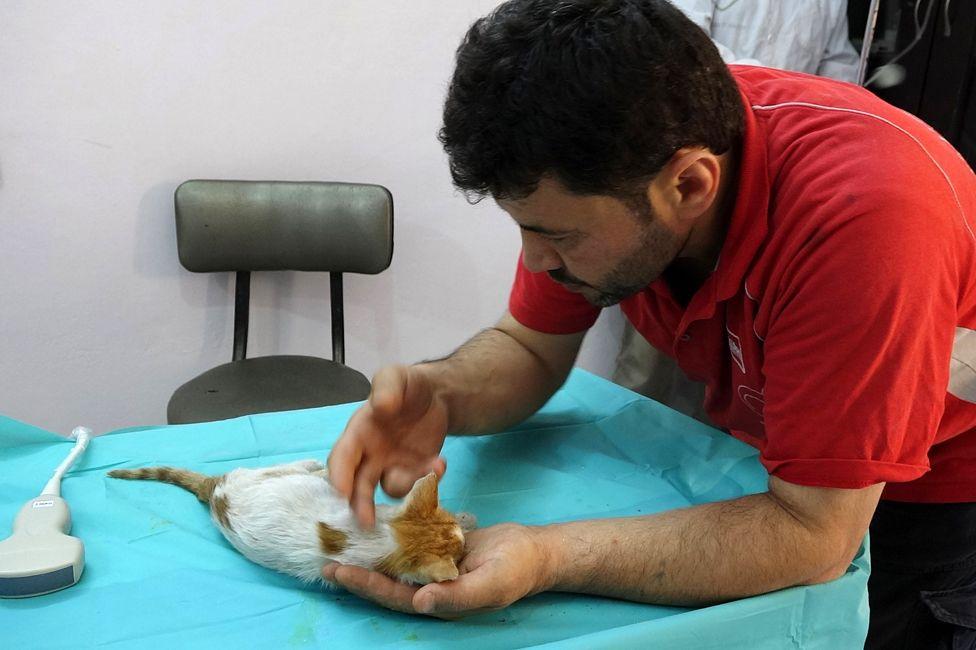 Alaa and a kitten