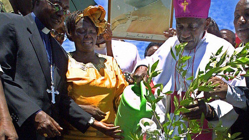 Ndingi Mwana a'Nzeki (R) waters an Olive Tree planted in memory of the late Pope John Paul II as 2005 Nobel Prize Laureate, Wangari Maathai (2nd-L) watches 07 April 2005, during a ceremony at Nairobi's Uhuru park