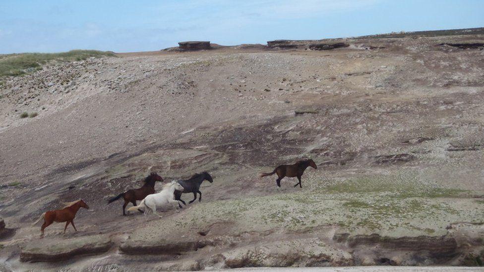 Wild horses on the island