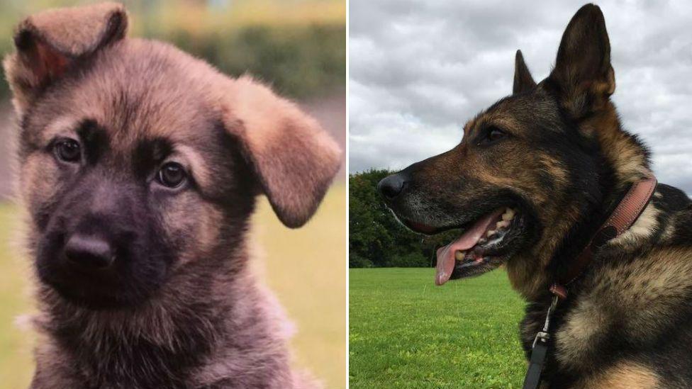 Guide dog puppy Finn and retired police dog Finn