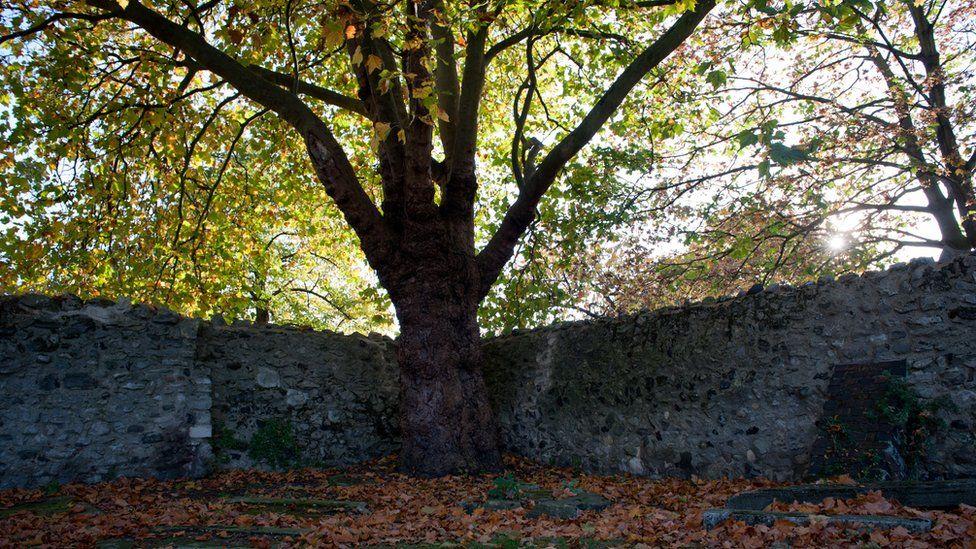 The corner of the graveyard where Daniel and Gabriel's bodies were found
