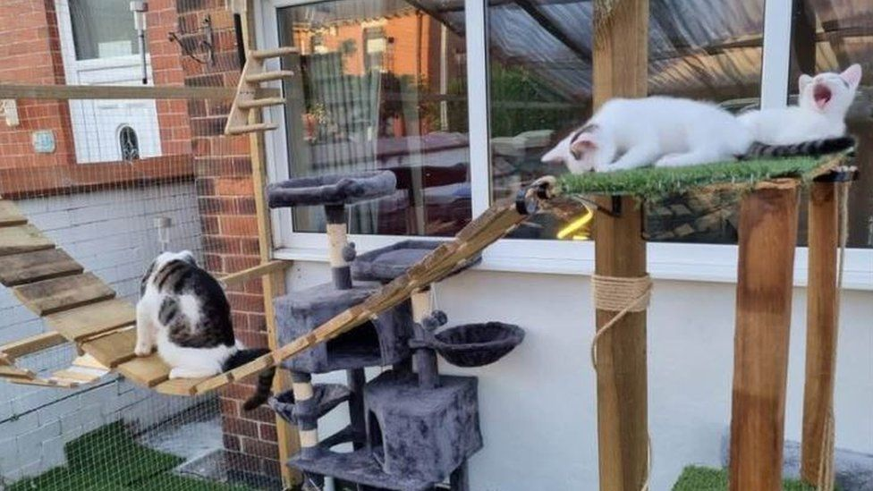 Catio Built Without a Permit