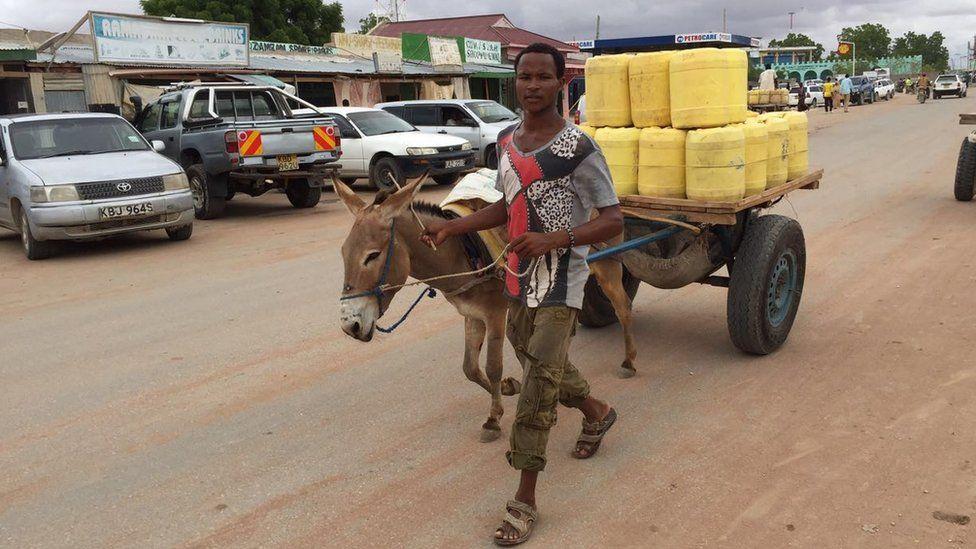 Donkey on a road in Wajir, Kenya