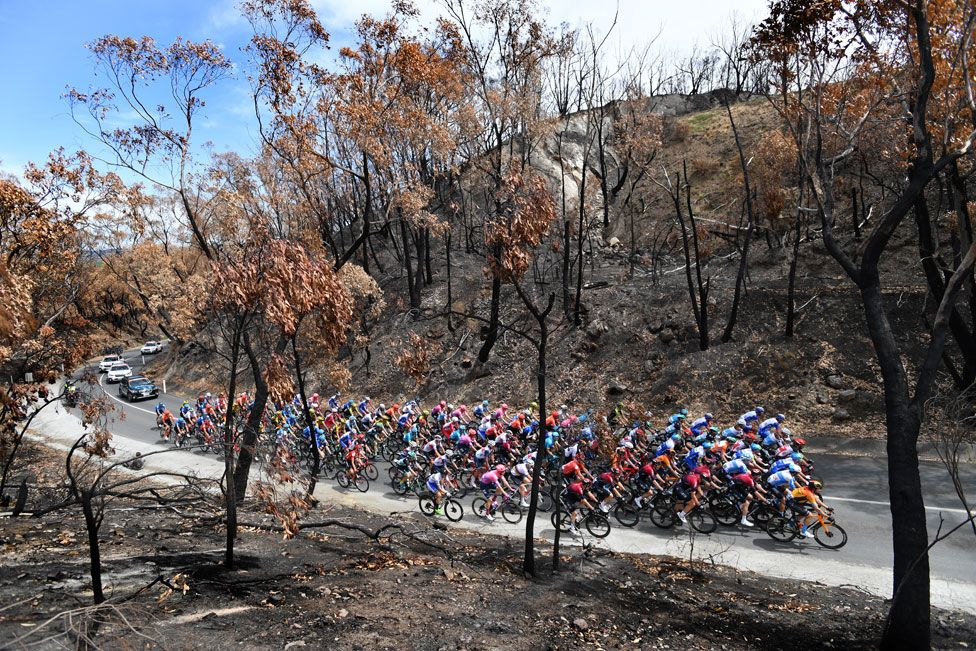 The peloton rides through a bushfire-damaged area in the Adelaide Hills during stage two of the Tour Down Under from Woodside to Stirling in South Australia.
