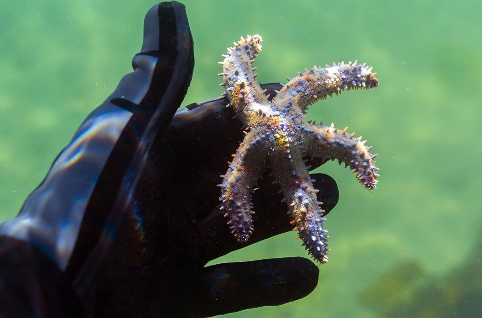 A marine biology student identifies a starfish during a marine biology survey in the Indian Ocean in False Bay, Cape Town, South Africa, 22 December 2018. Lead by Professor Colin Attwood from the University of Cape Town (UCT) a marine biology survey has been running each year for the past seven years by marine biology students and interested snorklers. In a designated area of the Simonstown harbour marine species are identified and logged