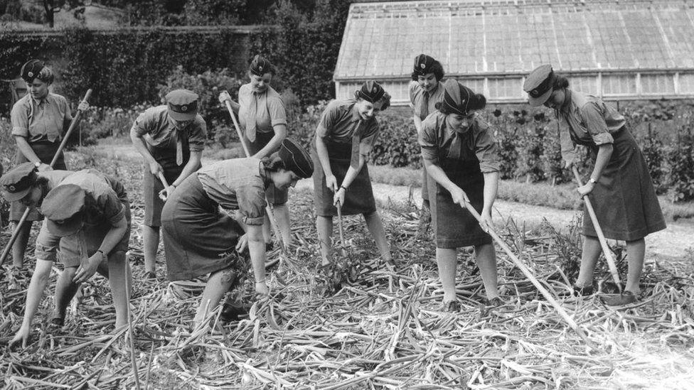 Uniformed women work in a farm
