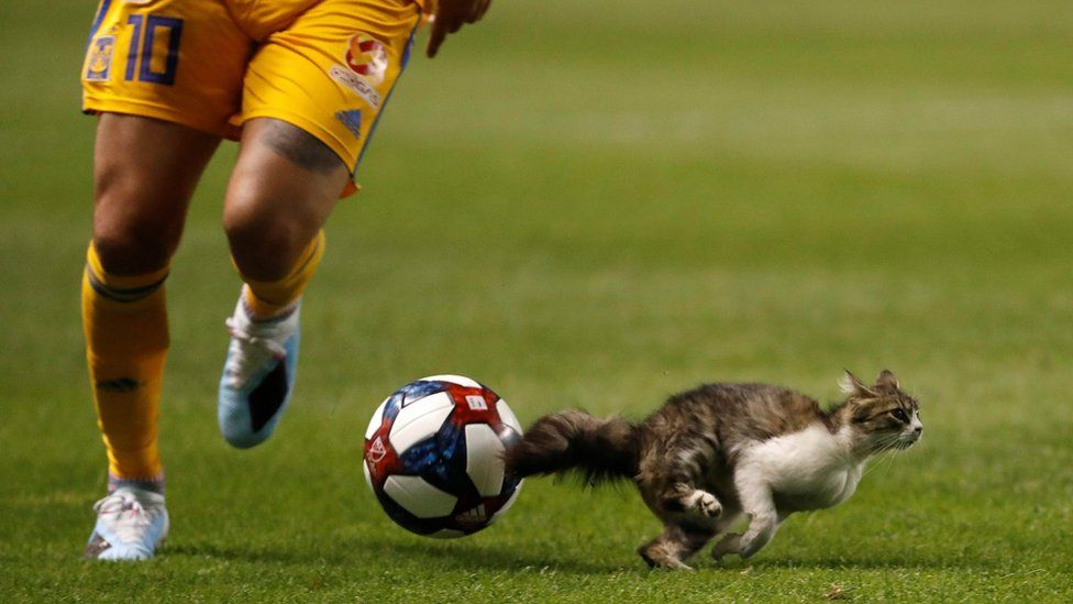 A cat runs in front of a footballer
