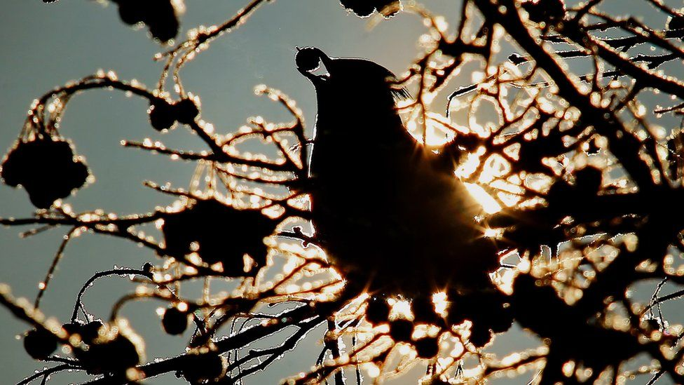 A bird standing on the branch of a tree eats a berry