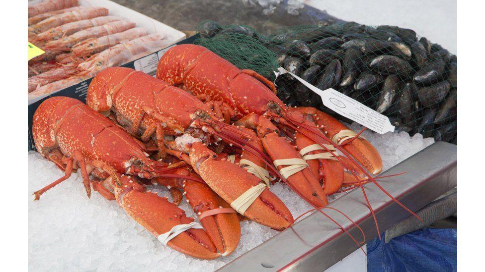 Ci-mwch olwg ar y pysgod // The world's your lobster
