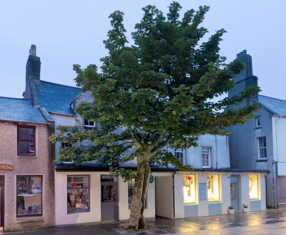 The Big Tree, Kirkwall, Orkney