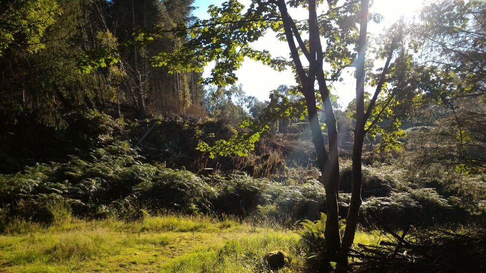 Forest near Kippford