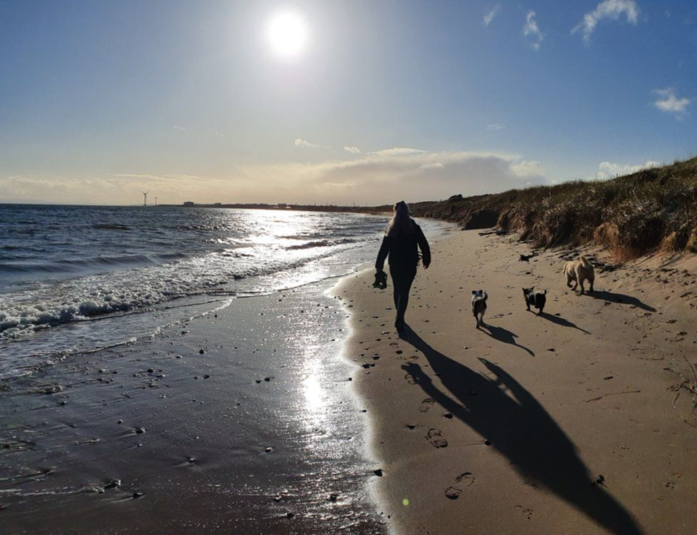 Walk with dogs on beach