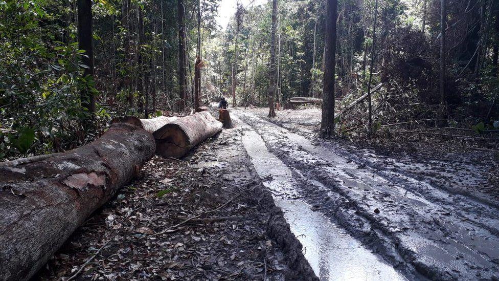 Desmatamento na Amazônia seria o dobro do registrado pelo Inpe, aponta estudo de universidade americana