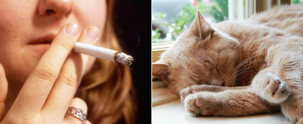 picture collage of woman holding a cigarette close to her mouth and a cat sleeping